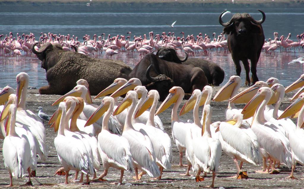 wildlife watching lake nakuru