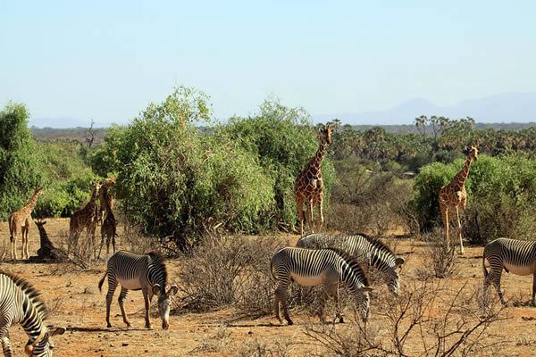 Game drive in Samburu Game Reserve
