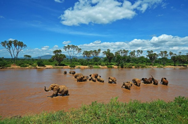 Elephants in Samburu Reserve
